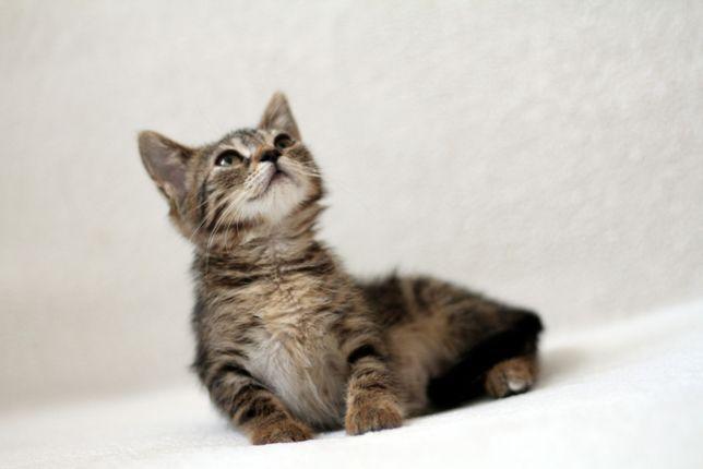 Malutka koteczka Chanel szuka dobrego domu