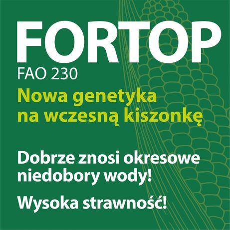 Kukurydza FORTOP 230 FAO Nasiona Kukurydzy NOWOŚĆ 2021