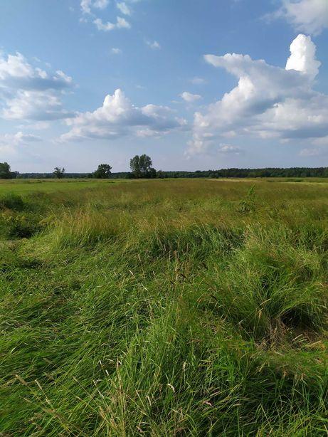 Trawa z łąki za skoszenie