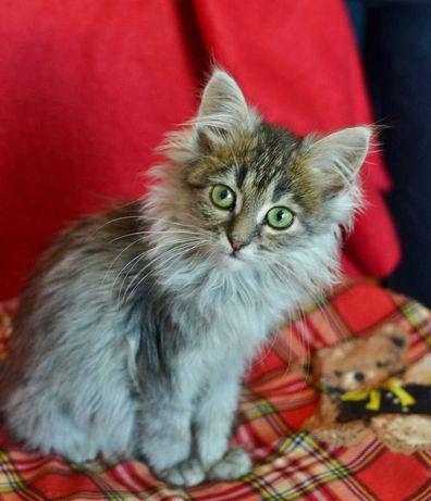 Малышка Фая, 3 мес, ищет дом и любящую семью! кошка кот котенок