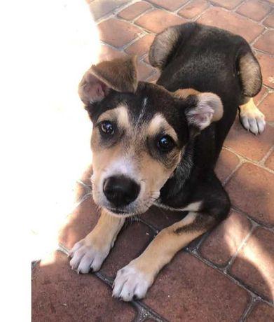 Риченька, игривая трехцветная собачка, собака, 10 мес, по колено