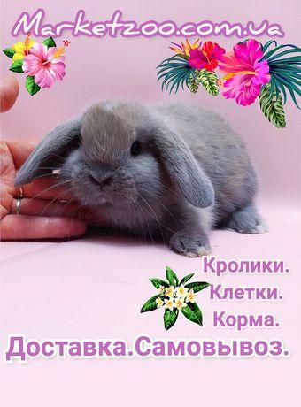 Карликовые мини кролики декорат.торчеухие и вислоухие кролики и клетки