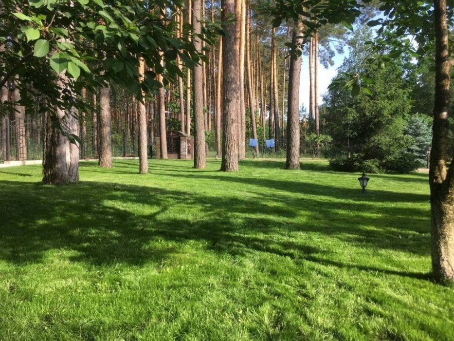 Автополив, рулонный газон, укладка тротуарной плитки, благоустройствоА Березовка - изображение 1