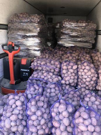 Ziemniaki czerwone Belaroza