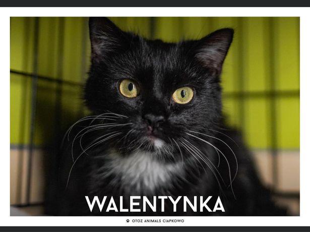 Znaleziona kotka- Cudna Walentynka poleca się do ADOPCJI.