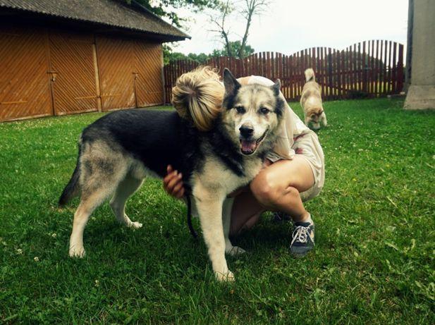 Przyjazny mix husky pies Djuk adopcja