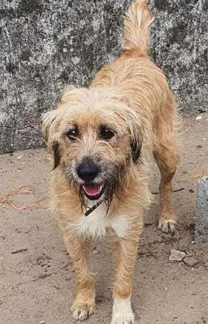 Farrusca- cachorra de porte médio para adoção