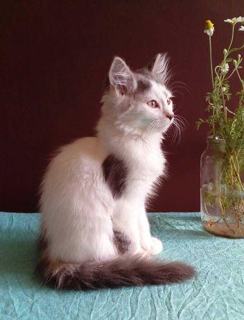 отдадим чудесных котят в добрые руки