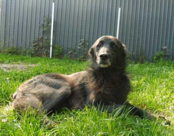 Smutny Piesek czeka wyczekuje Domku