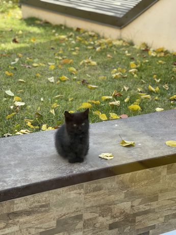 Отдаю бесплатно маленького котика