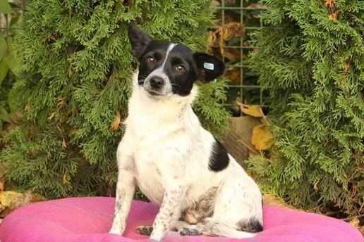 Кнопа, маленькая ласковая собака, 5 кг