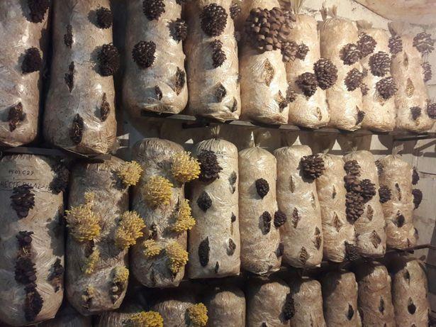 Скидка! Зарощенные грибные блоки ВЕШЕНКИ