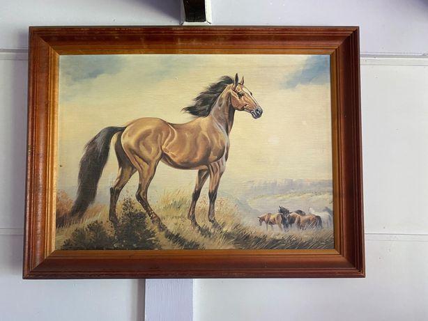 Kolorowy obraz z koniem