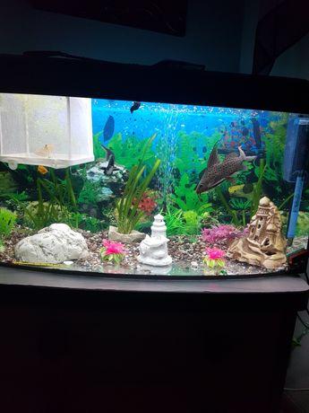 Akwarium plus rybki