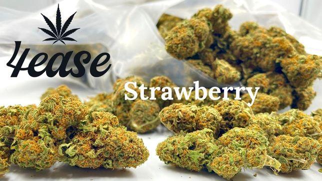 Susz CBD Strawberry 100g Wyprzedaż