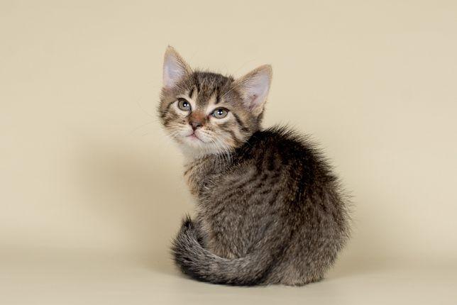 Домашний котик от домашней кошки!