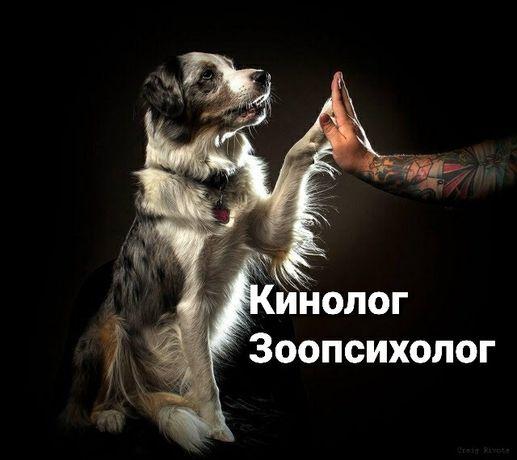 Online. Дрессировка собак, коррекция поведения. Кинолог-зоопсихолог.