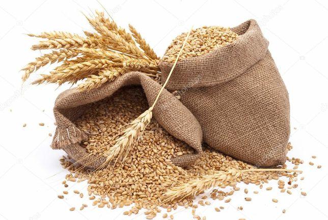 Ячмінь пшениця продам