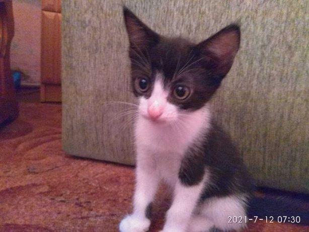 Милые котята ищут хорошую семью :-)