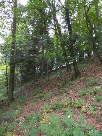 Działka leśna w Limanowej