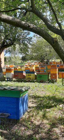 Бджолопакети бакфаст
