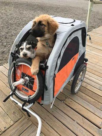 Trailer de bicicleta Petego Comfort Wagon L para cães