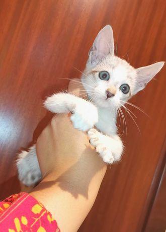 NICO - Gato bebe para adoção