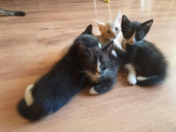 Kot - małe kotki
