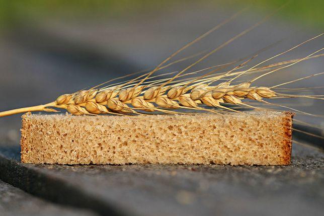насіння,Канадский ярый трансгенный сорт твердой пшеницы элиты MORENO