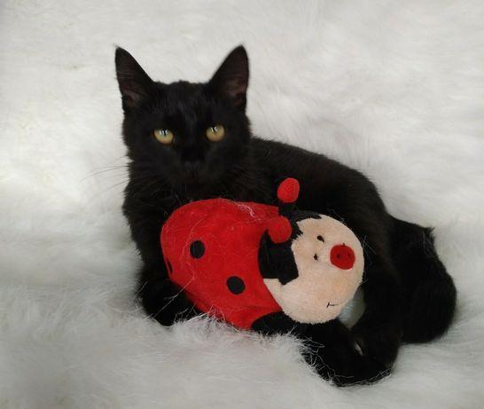 Чудесный  котенок Лио 5 мес . Котенок для души.
