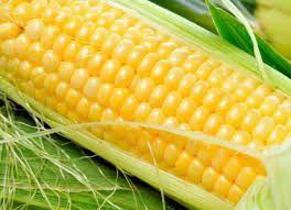 Домашнє насіння десертної кукурудзи / семена кукурузы