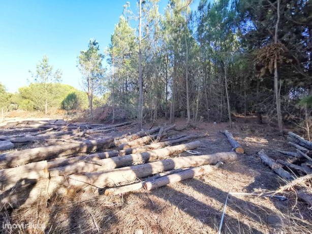 Lagoa de Albufeira / Projecto aprovado 4 moradias/ 3 minutos Praia