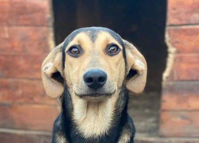 Собачка Майя хочет домой, 6 месяцев, очень ласковая собака