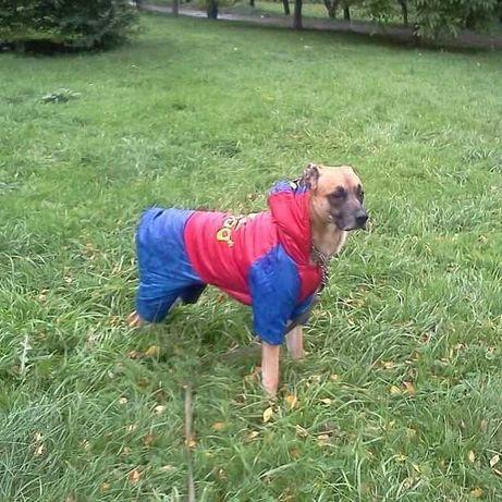Пропоную послугу вигулу собак будь-якої породи