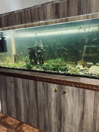 Продам аквариум 540 литров , тумба , рыбки, растения