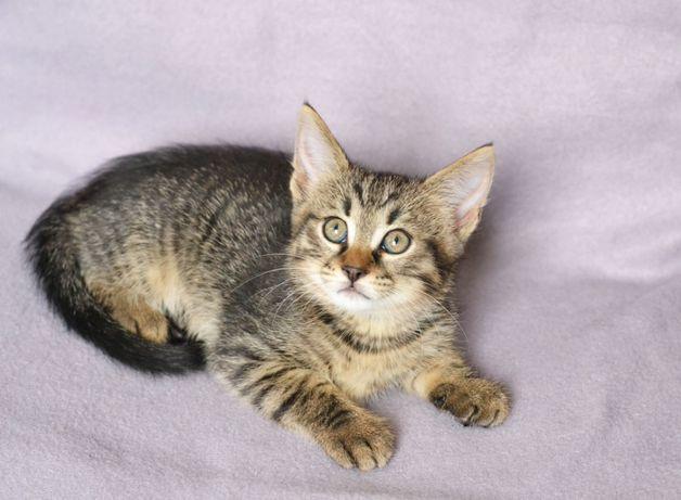 Маленький ласковый ребенок котик Мартин ищет теплый дом, 2 месяца