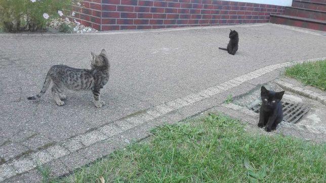 Dwa słodkie kotki