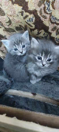 Котята Спасите красоту и радость