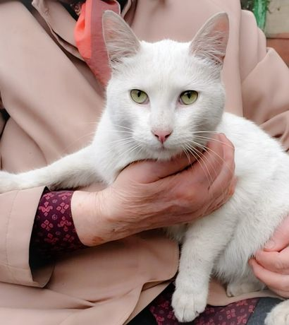 Очень ласковый белый кот