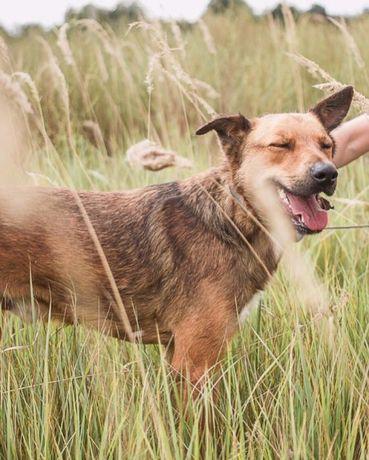 Собака ищет дом! Охранник и верный друг Ронни ищет хозяина!