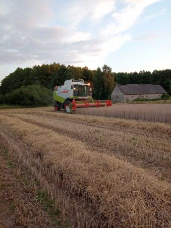 Zbiór, Koszenie zbóż kukurydzy