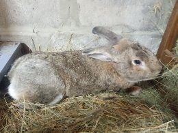 Продам домашних кроликов