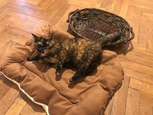 Koszyk i poduszka dla kota. Zabawka gratis!