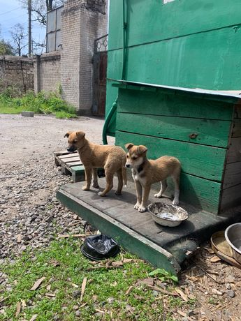 Красивые щенки ищут новый дом