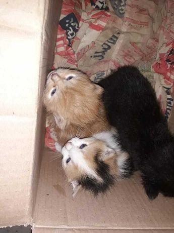 Срочно, присрочно нужен дом маленьким котятам! Отдам котенка