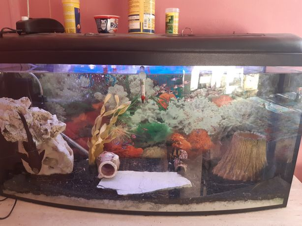 Kompletne 200 litrowe panoramiczne akwarium
