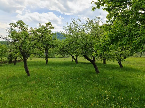 Продається земля з будинком 60.0 сотиків Черешенька Вижницкий район.