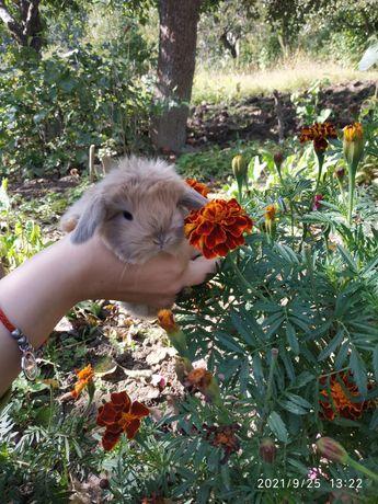 Декоративные кролики милашки