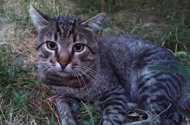 Ласковый молодой котик ищет любящую семью. Кастрирован, привит.