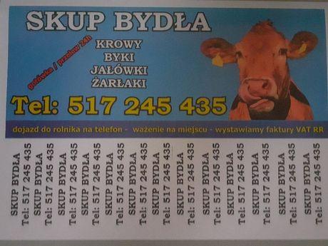 Skup bydła! Atrakcyjne ceny!